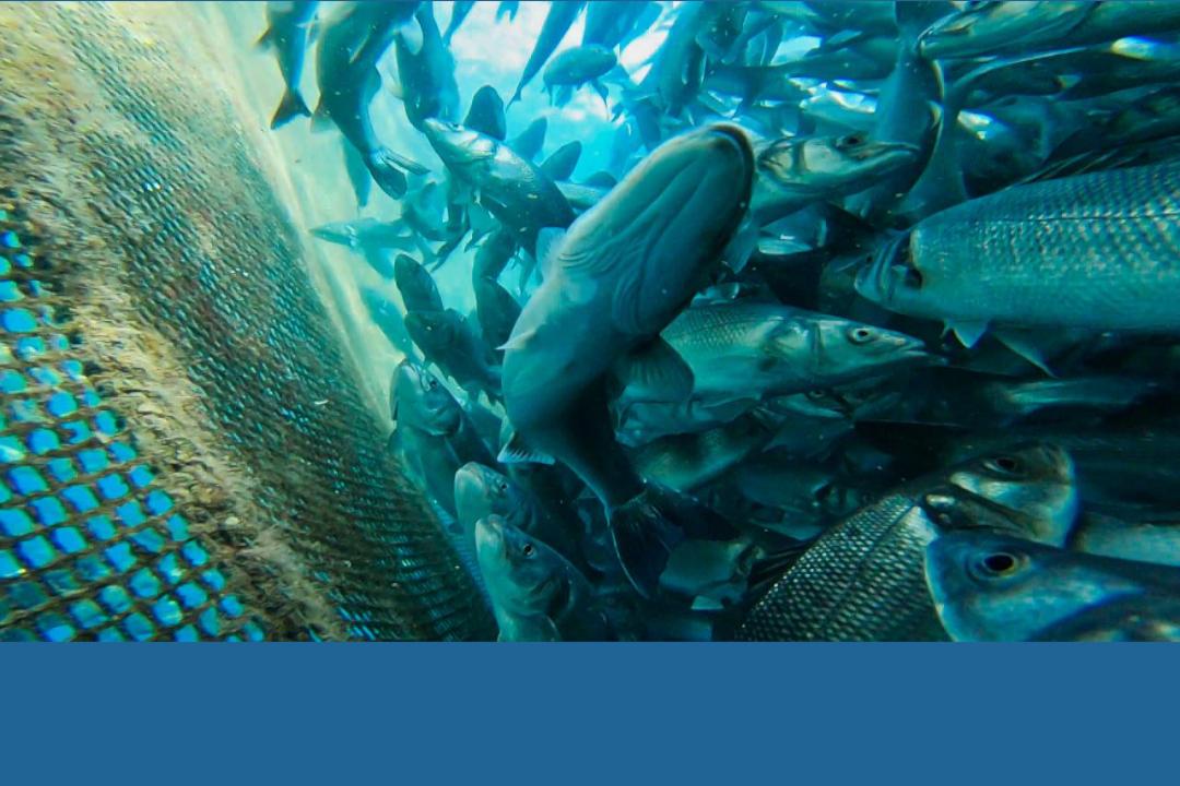 <strong>Gouvernement Cap Vert : PROA/Banque mondiale : Révision de Plan de Gestion de la Pêches (PGRP) et élaboration d'une stratégie de développement</strong>