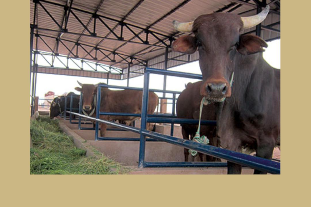 <strong>PRAPS : Opérateur pour la mise en gestion des infrastructures du projet régional d'appui au pastoralisme au sahel</strong>